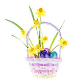 Daffodil & Easter Eggs in Basket - Isolated Stock Image