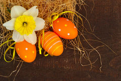 Daffodil And Easter Eggs Stock Images
