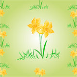 Daffodil Easter flower seamless texture vector Royalty Free Stock Images