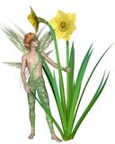 Daffodil Fairy Boy stock illustration