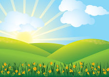 Daffodil field - vector Stock Photography