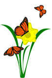Daffodil flower. A yellow Daffodil flower with butterflies Stock Photos