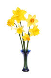 Daffodil flower arrangement Stock Photos