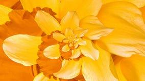 Daffodil Flower Droste. Swirl of Daffodil Flower Petal stock video