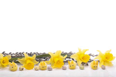 daffodil flowers isolated over white Royalty Free Stock Images