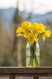 Daffodil flowers in a jar Royalty Free Stock Image