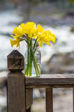 Daffodil flowers in a jar Royalty Free Stock Photos