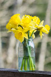 Daffodil flowers in a jar Royalty Free Stock Images