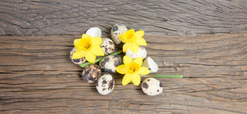 Daffodil flowers and quail eggs. Stock Photography