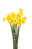 Daffodil flowers in a vase royalty free stock photos