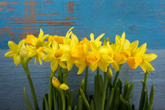 Daffodil flowers. On wooden background stock photos