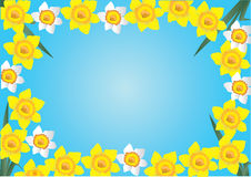 Daffodil frame Stock Images