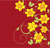 Daffodil frame. Illustration of daffodil frame with butterflies Stock Images