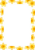 Daffodil frame. Writing paper with daffodil border Stock Photography