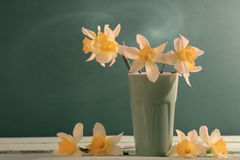 Daffodil on green background Royalty Free Stock Photos