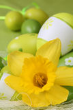 Daffodil and green Easter eggs Royalty Free Stock Images