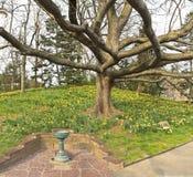 Daffodil Hill Birdfeeder Royalty Free Stock Image