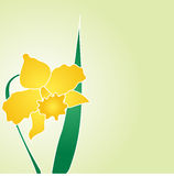 Daffodil-jonquil vector design Royalty Free Stock Photography