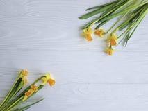 Daffodil kwiat sezonowy na białym drewnianej ramy tle zdjęcia stock