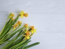 Daffodil kwiatu szablonu rocznika sezonowy okwitnięcie na białym drewnianej ramy tle zdjęcie royalty free