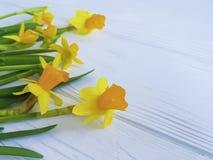 Daffodil kwiatu szablonu sezonowy okwitnięcie na białym drewnianej ramy tle zdjęcie royalty free