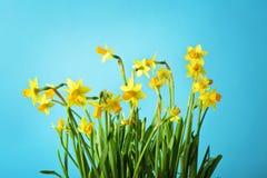 Daffodil kwiaty fotografia royalty free