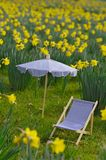 Daffodil meadow with parasoil and canvas chair Stock Images