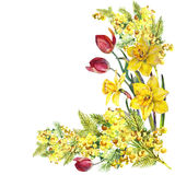 Daffodil, mimosa, tulip flowers, corner, watercolor, pattern Royalty Free Stock Images