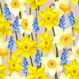 Daffodil and muscari vector seamless background Royalty Free Stock Photos
