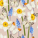 Daffodil and muscari vector seamless background Stock Image