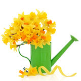 Daffodil and Narcissus Royalty Free Stock Photo