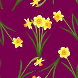 Daffodil - Narcissus on Red Violet Background. Vector Illustration Stock Photos