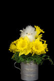 Daffodil Nest Royalty Free Stock Photos