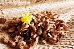 Daffodil. One bloom with almonds skins Royalty Free Stock Photos