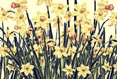 Daffodil Photoart Background Stock Images