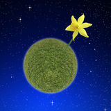 Daffodil planet Stock Photography