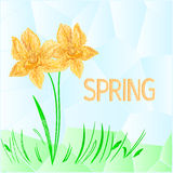 Daffodil polygons spring background vector Royalty Free Stock Image