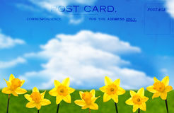 Daffodil Postcard Royalty Free Stock Images