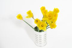 Daffodil in pot. Stock Photography