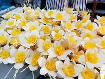 Daffodil present Sandalwood Flowers as a final tribute to His Majesty The Late King Royalty Free Stock Images