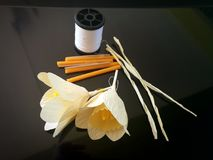 Daffodil present Sandalwood Flowers as a final tribute to His Majesty The Late King. Of Thailand Stock Image