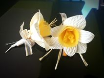 Daffodil present Sandalwood Flowers as a final tribute to His Majesty The Late King. Of Thailand Royalty Free Stock Photo