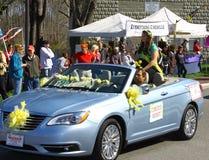 Daffodil Priincess Christine Riddett Royalty Free Stock Photos