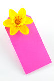 Daffodil on purple card Royalty Free Stock Image
