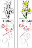 Daffodil - Two Price Tags Royalty Free Stock Image
