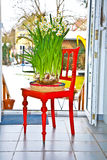 Daffodil in vase on red chair Stock Images