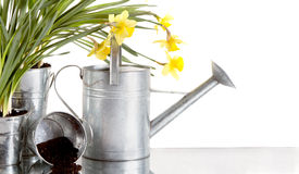 Daffodil and watercan still life Royalty Free Stock Images