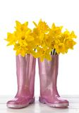 Daffodil Wellies Royalty Free Stock Photography