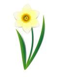 Daffodil. Royalty Free Stock Image