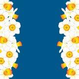 Daffodill - Narcissus Border on Indigo Blue Background. Vector Illustration. Daffodill - Narcissus Border on Indigo Blue Background. Vector Illustration Vector Illustration